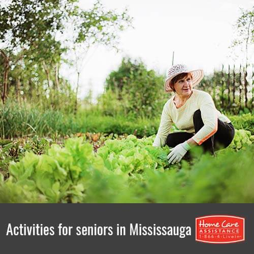 Fun Activities for Seniors in Mississauga, CAN