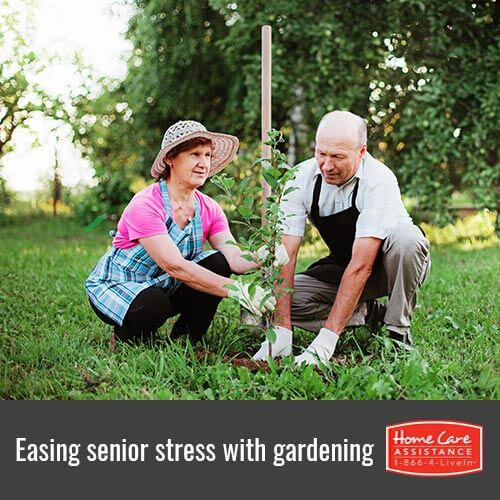 How to Relieve Senior Stress Through Gardening in Mississauga, CAN